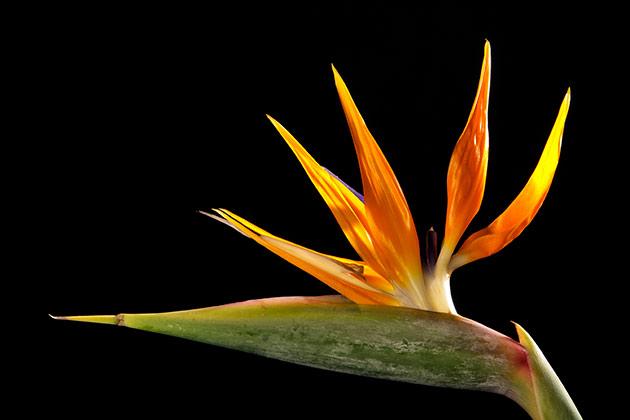 bloemenfotograaf
